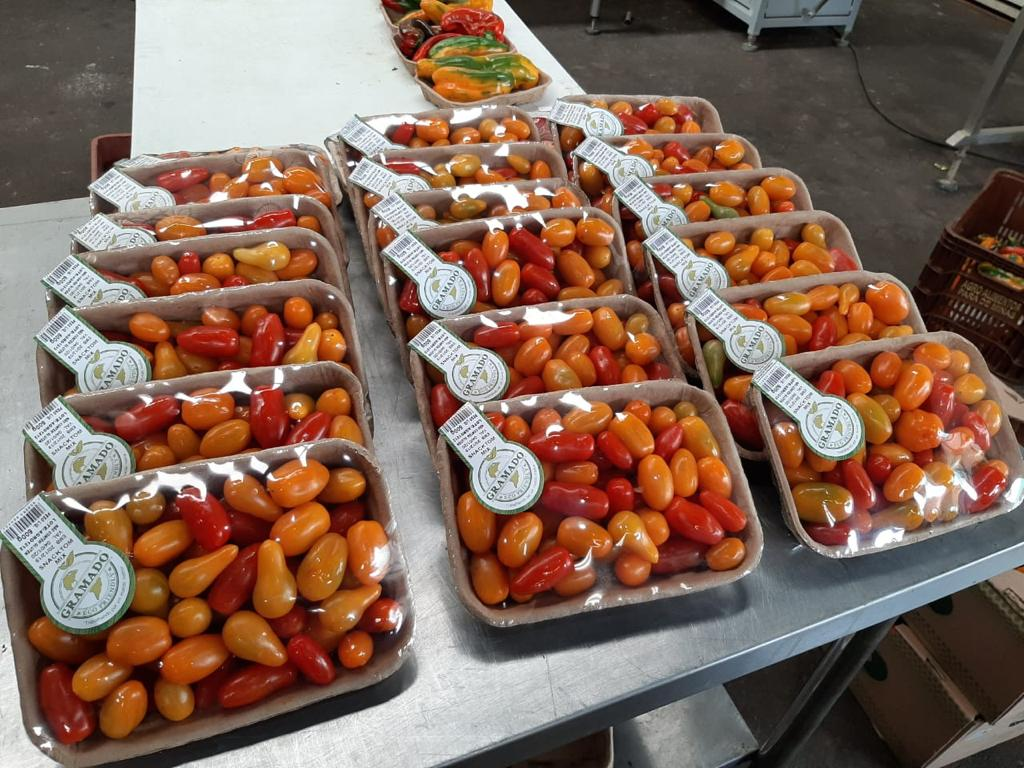 Gramado_tomatoes